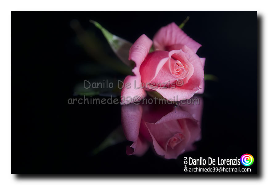 Danilo De Lorenzis Still Life Natura Morta